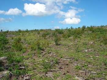Terreno próprio para agricultura/ Florestas.