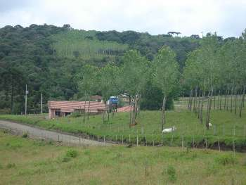 Fazenda São Sebastião - Cambará - Bom Retiro