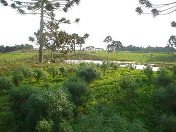 Fazenda São Matheus em São Joaquim
